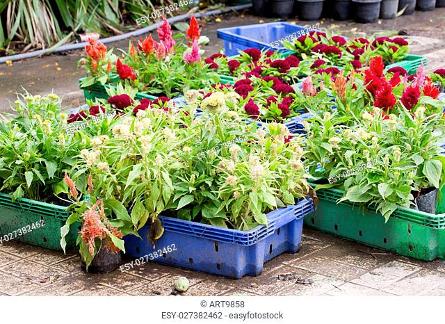 Flowers for sale at Bangkok, Thailand