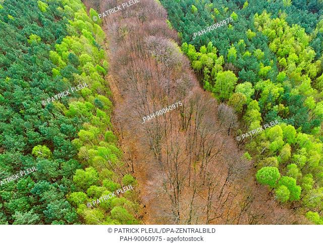 An aerial image taken with a drone shows conifers and broad-leafed trees in various shades of green in a forest near Sieversdorf, Germany, 21 April 2017