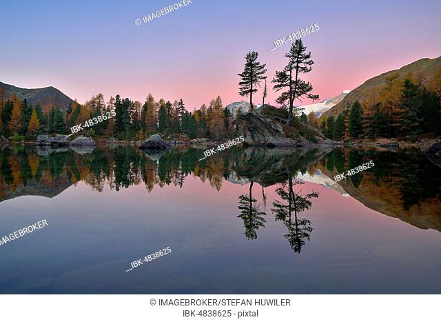 Larch forest reflected in Lake Lago di Saoseo, Blue Hour, Val di Campo, Canton Graubünden, Switzerland, Europe