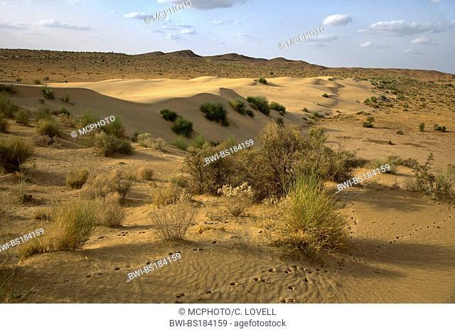 sand dunes in the THAR DESERT near JAISALMER, India, Rajasthan