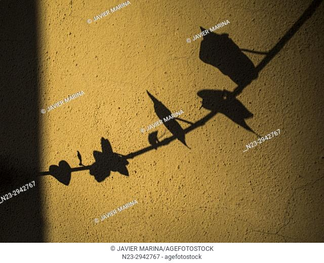 Shadow of a branch on the wall, Sagunto, Valencia, Spain
