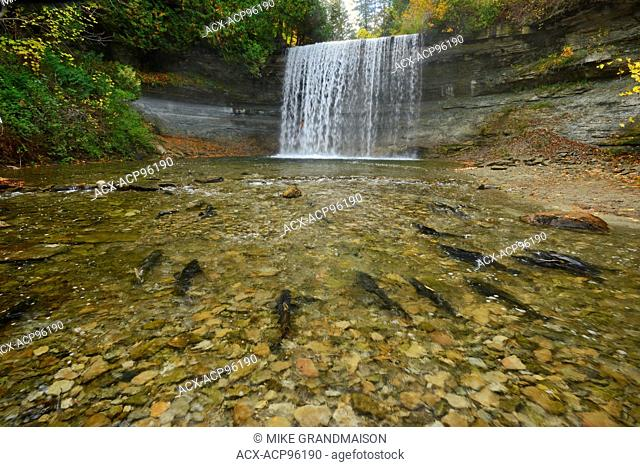 Salmon spawning. Kagawong River at Bridal Veil Falls in Kagawong. Manitoulin Island Ontario Canada