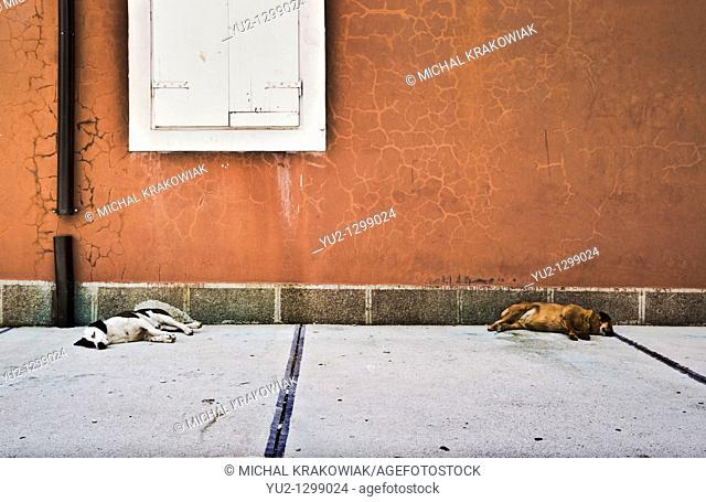 Two dogs sleeping on a street of Kotor Montenegro