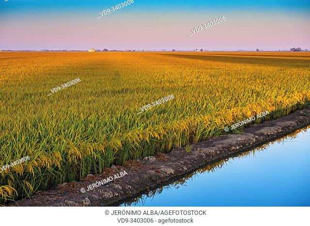 Sunrise. Rice fields in the Guadalquivir river delta near Los Palacios y Villafranca, Sevilla province. Southern Andalusia, Spain. Europe
