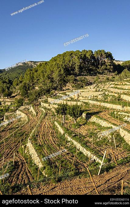 bancales para viña, La Bernadeta, Esporles, Mallorca, Balearic Islands, Spain