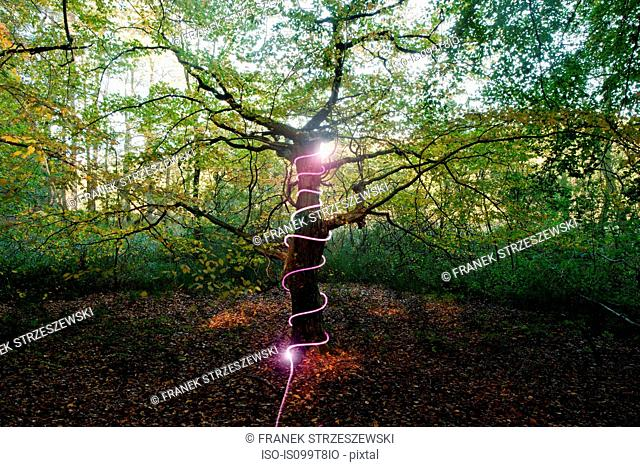 Light wrapped around a tree in forest