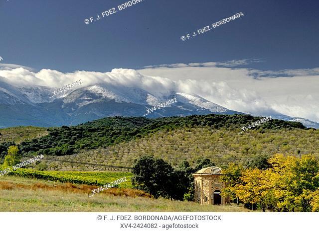 Veruela vineyard with Moncayo pic background. Tarazona and Moncayo region, Aragon, Spain