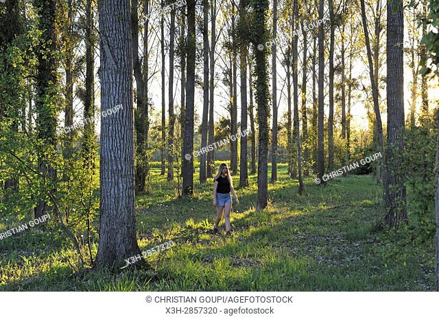 young girl wandering in poplar grove, Eure Valley, Eure-et-Loir department, Centre-Val de Loire region, France, Europe