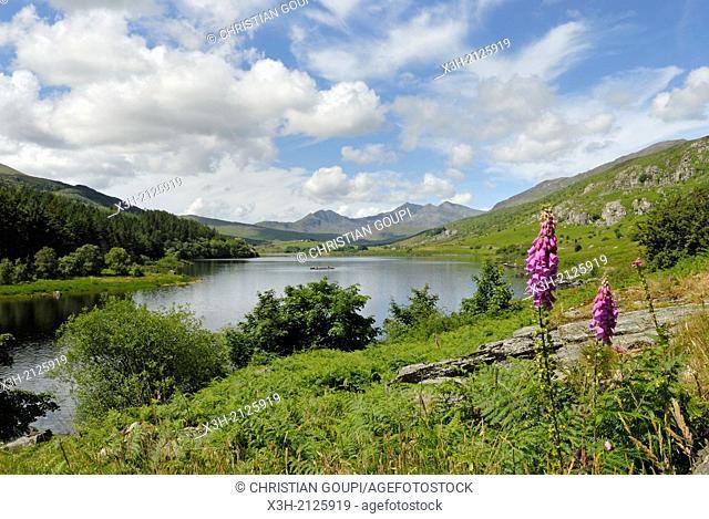 lake in Snowdonia National Park, Wales, United Kingdom, Great Britain, Europe