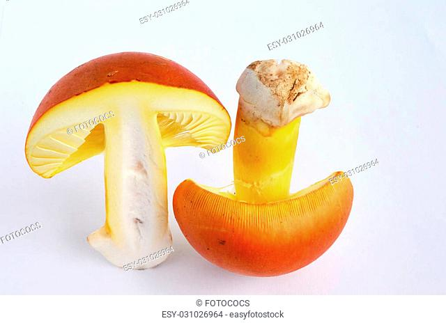 Amanita Caesarea or Caesar's Mushroom, one of the most delicious wild mushrooms, isolated on white background, cross section