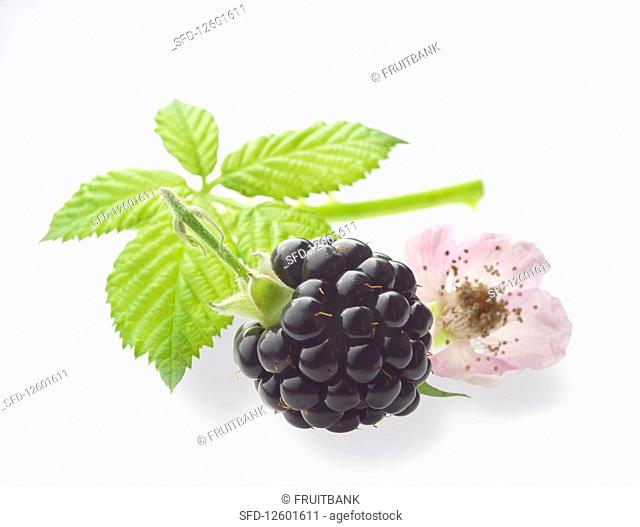 A blackberry with a leaf and blossom