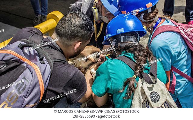 """""""""""""""""""""""Dog suffocated by tear gas pumps"""""""" Opponents march once more through the streets and freeways of Caracas against the government of Nicolás Maduro on April..."""