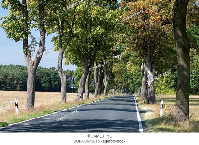 Germany, Brandenburg, Rheinsberg, straight narrow tree lined road through countryside