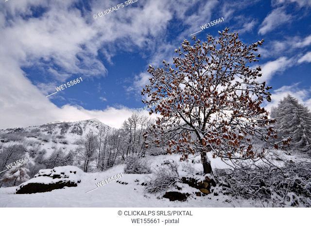 Orsiera Rocciavre Park, Chisone Valley, Turin, Piedmont, Italy. Autumn Orsiera Rocciavre Park
