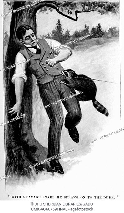 With a savage snarl he sprang on to the dude, illustration of a man being attacked by a raccoon, the raccoon biting at his vest