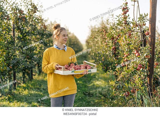 Young woman holding crate with apples in orchard