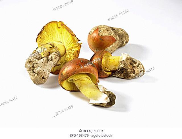 Four Caesar's mushrooms