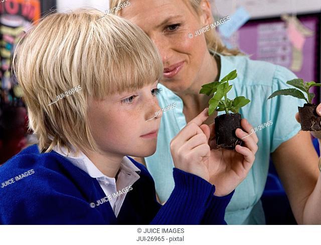 Teacher and school boy looking at plant seedlings in classroom