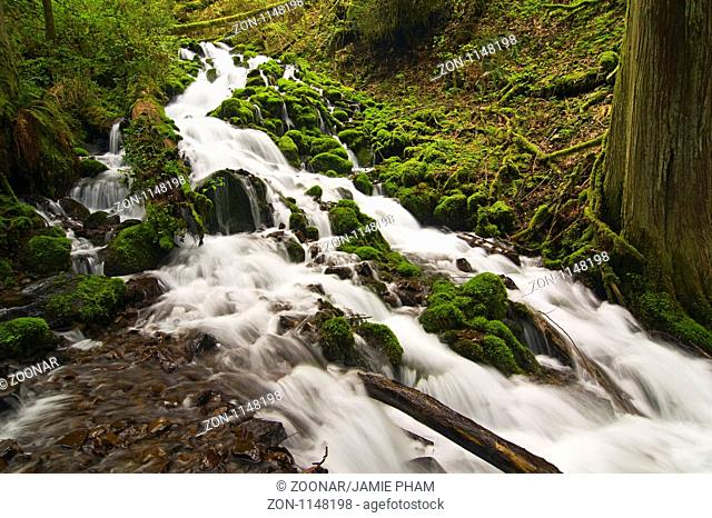 Mossy River flowing