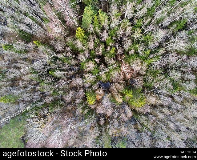 Aerial top view of trees from above in autumn forest. Natural landscape. Pattern texture background