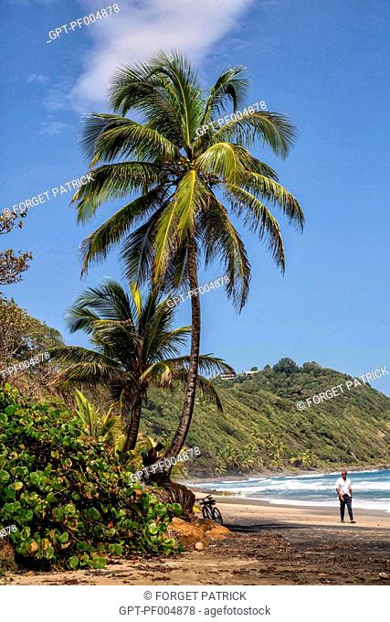 A WALK ON THE BIG BEACH OF ANSE CHARPENTIER, LE MARIGOT, MARTINIQUE, FRANCE