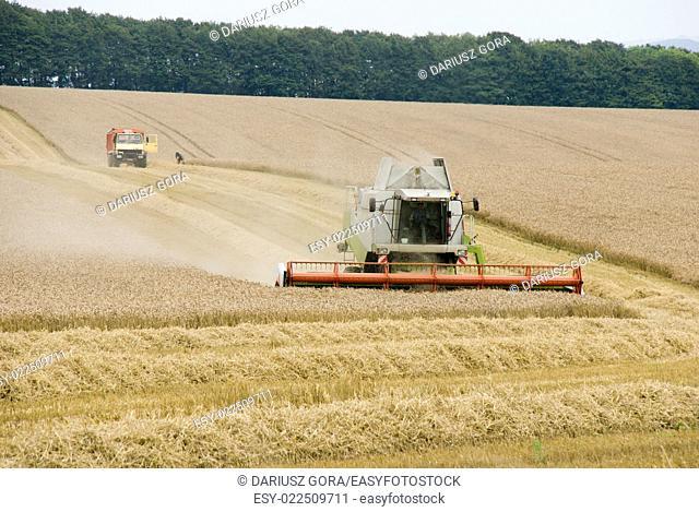 Harvest time, Waltshire, United Kingdom