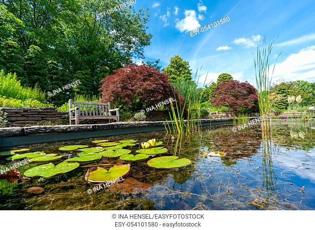 formal rectangular walled garden pond with water lilies and lily pads and a park bench and red acer in the background