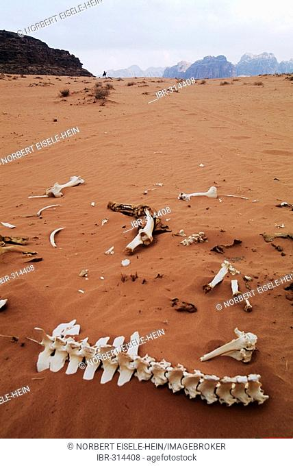 Skeleton, Wadi Rum, Jordan