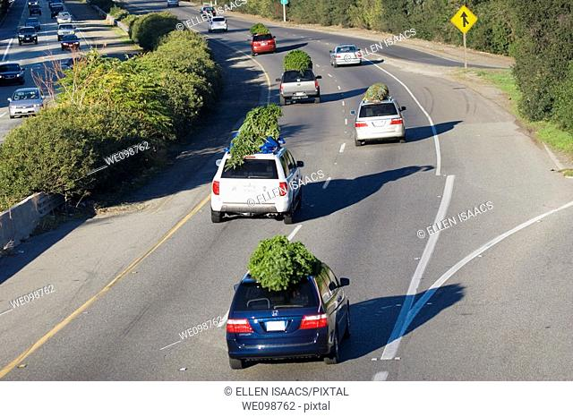 Cars and SUVs driving on the highway with Christmas trees tied to their roofs on Thansgiving Day weekend