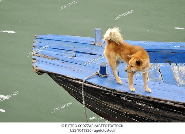 Halong Bay (Vietnam): dog on a boat