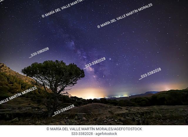 Milky Way over Concejo pinewood in Cadalso de los Vidrios. Madrid. Spain. Europe