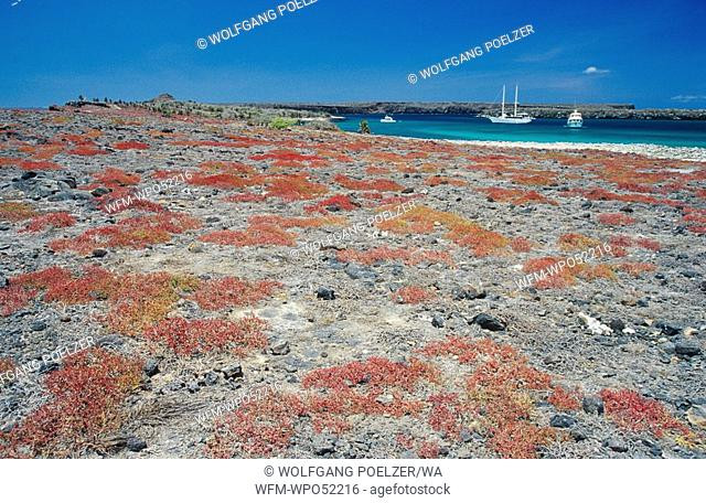 Galapagos National Park, Galapagos, Pacific Ocean, Ecuador
