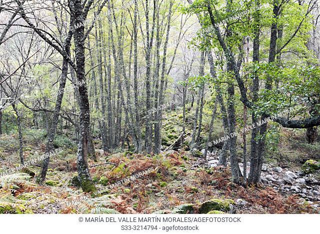Fall at Solana Toro stream in Iruelas Valley. Avilla. Spain. Europe