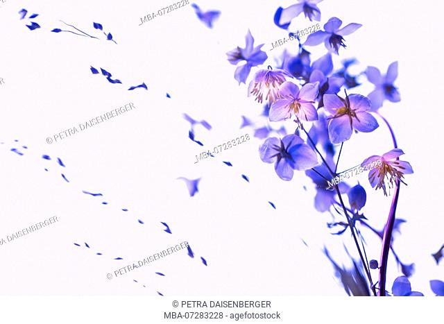 Small flowers coming out big - ultraviolet, pastel, soft and romantic