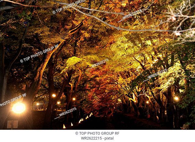 Red Corridor;Viewing Lights;Japan