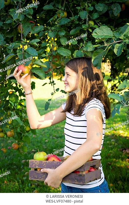 Smiling girl picking apple from tree
