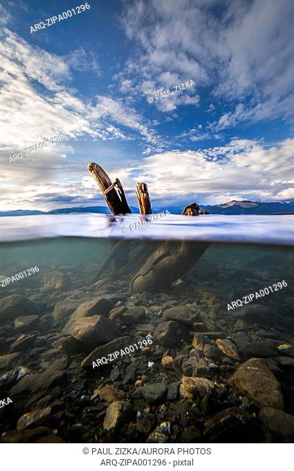 View Of Driftwood Underwater In Lake Kluane