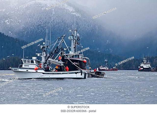USA, Alaska, Sitka, Seining for herring