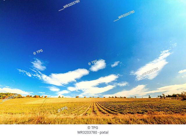 Field against the sky in Gordes; France