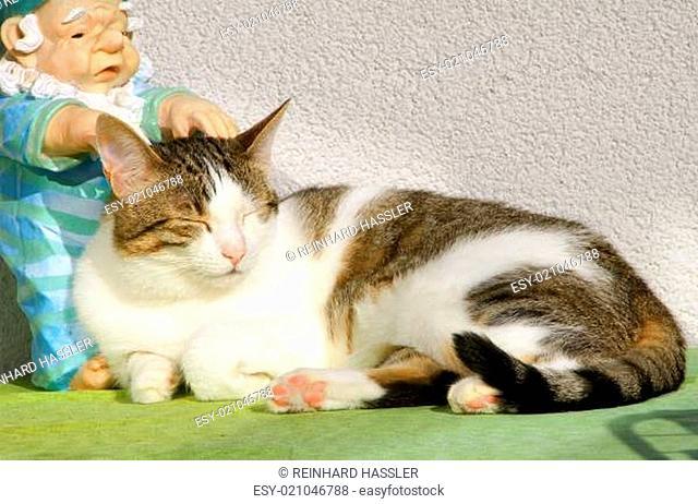 Völlig entspannte Hauskatze (masage)