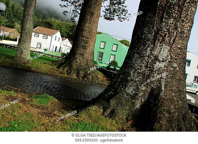Houses and giant trees in Sete Cidades, Sao Miguel island, Azores, Portugal