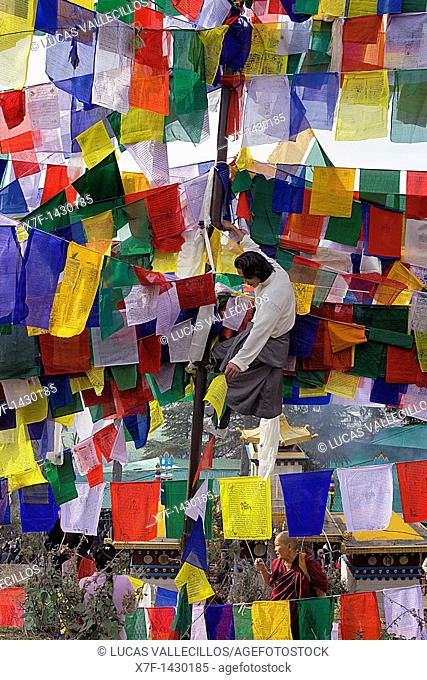 Man hanging Tibetan prayer flags in Lhagyal Ri, near Tsuglagkhang complex, McLeod Ganj, Dharamsala, Himachal Pradesh state, India, Asia