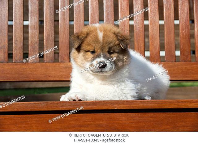 Eloschaboro Puppy
