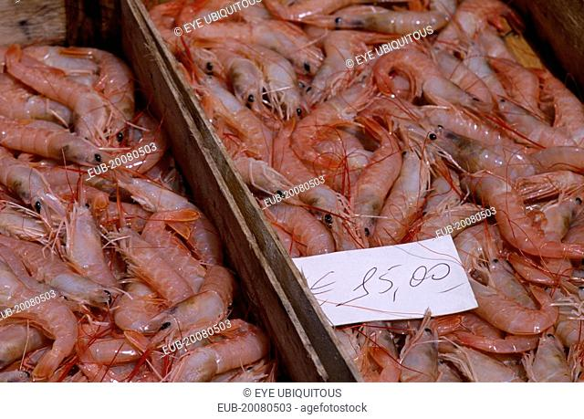 La Pescheria di Sant Agata. Fish market with detail of fresh Shrimp in trays on stall with a euro money price sign