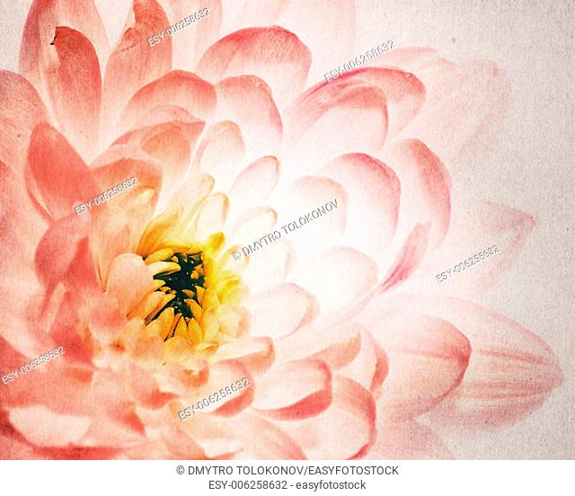 Dahlia flower as background with added old cardboard texture