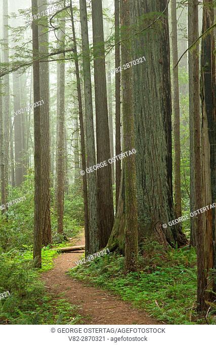 Oregon Redwoods Interpretive Trail, Siskiyou National Forest, Oregon