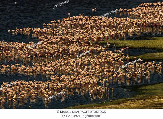 Aerial view of flamingo mass om Lake Bogoria shore. Kenya