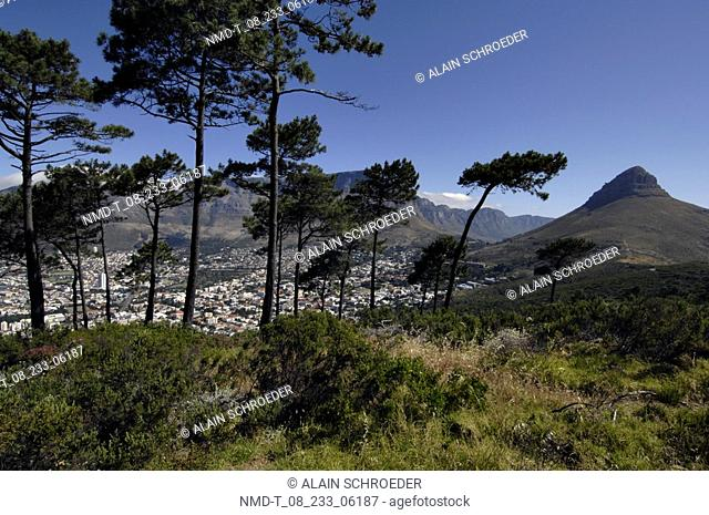Trees in a landscape, Table Mountain, Cape Town, Western Cape Province, South Africa