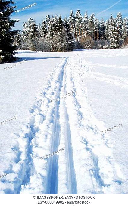 Cross-country skiing tracks in snow covered forest. Perlacher Forst, Munich, Germany