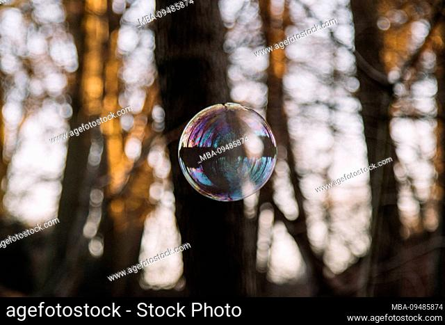 soap-bubble in the forest, close-up